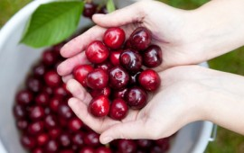 Cherries - natural remedy for inflamation and pain