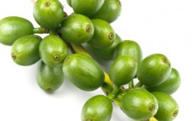 green coffee beans to lose weight